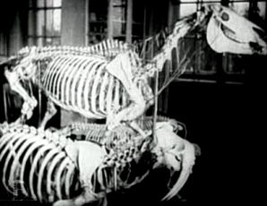 Ringkäik Tartu Ülikooli Zooloogia Muuseumis