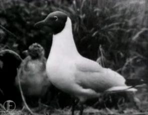 Vilsandi linnuriik
