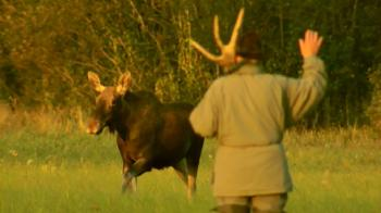 Old Man and the Moose