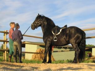 Laulatatud hobustega