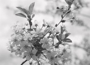 Kolm kevadet