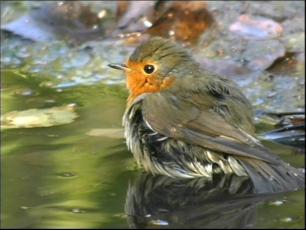 Pesupäev ehk väike linnuaabits