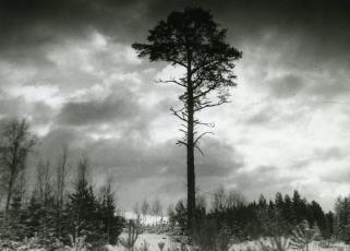 Miks puud enam ei kõnele