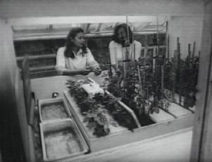 800 lööki ehk kilgilaulu soodsast mõjust kartuli kasvatamisel