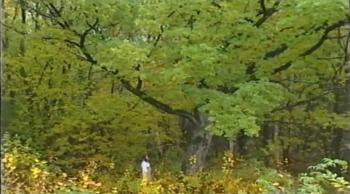 Põhjamaa metsade lapsed