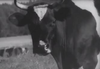 Eesti NSV loomakasvatus