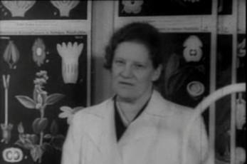 Alma Tomingas - esimene naisprofessor Tartu Riiklikus Ülikoolis