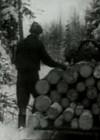 Täidame tähtajaks metsatööde plaani