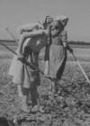 Maisipõldude hooldamine