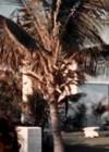 Perepuhkus Floridas
