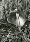 Matsalu linnuriik