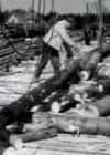 Suvistel metsatöödel